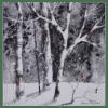 Winter Birch II 10x10 by Doris Pontieri